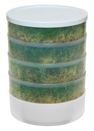 5 gallon bucket wheat grass