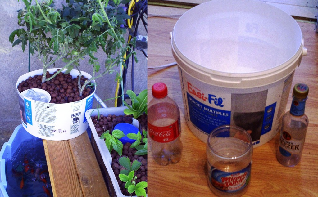 low tech 5 gallon bucket aquaponics