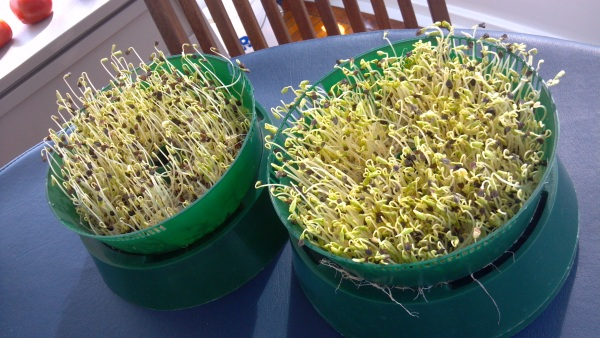 growing-sprouts-on-boat
