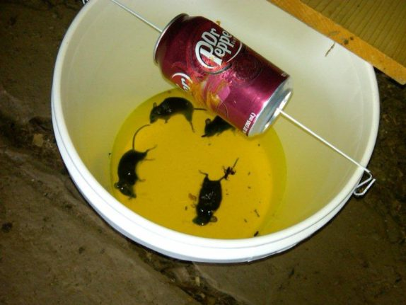 Bucket Mouse Traps Five Gallon Ideas
