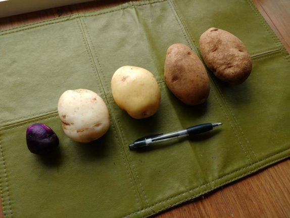 russian blue white potato yukon gold russets comparison