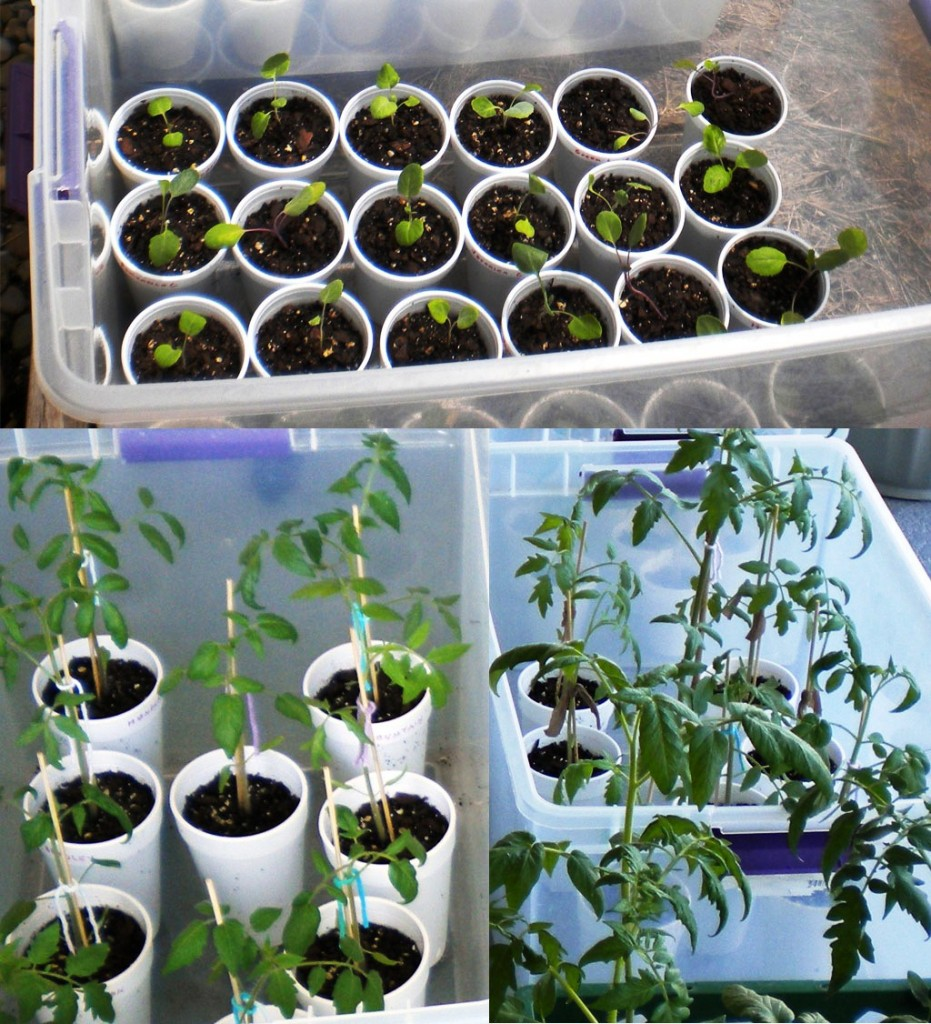 mini greenhouse growth phases