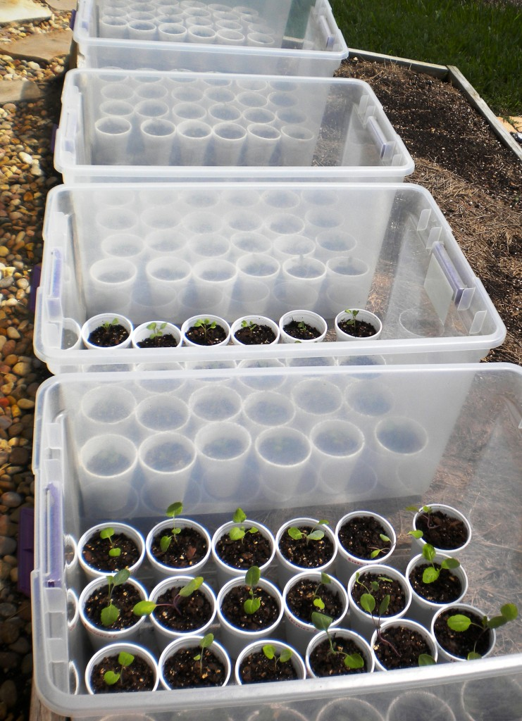 mini-greenhouses-buckets