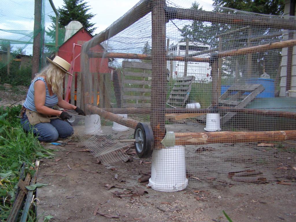 chicken tractor on buckets