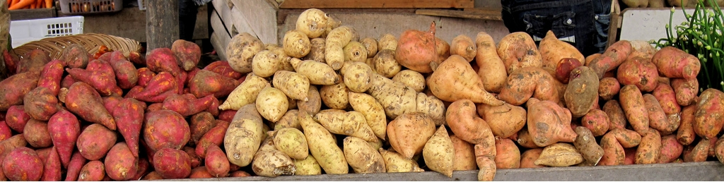 sweet-potatoes-lineup