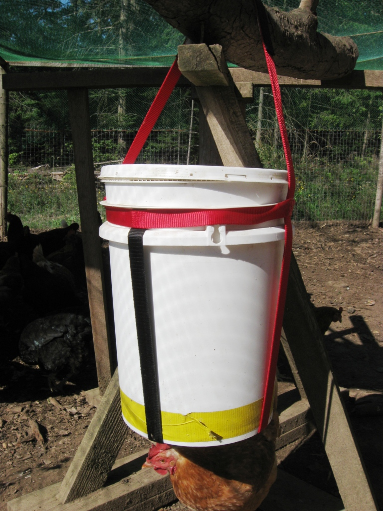 bucket-sling-waterer-and-chicken