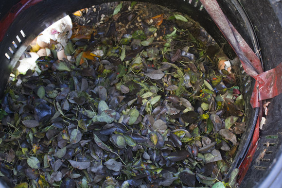 compost-pile-with-leaves