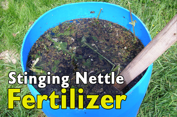 stinging-nettles-fertilizer