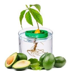 Avoseedo Avocado product