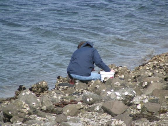 young man gathering oysters