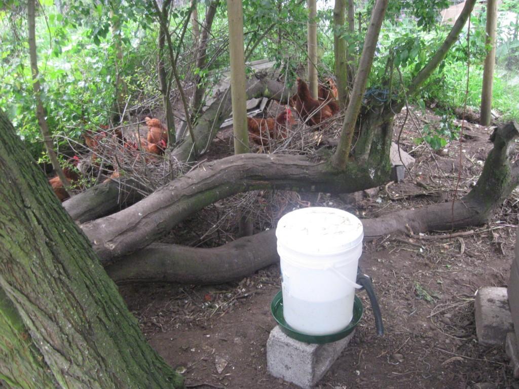 5 gallon bucket chicken waterer