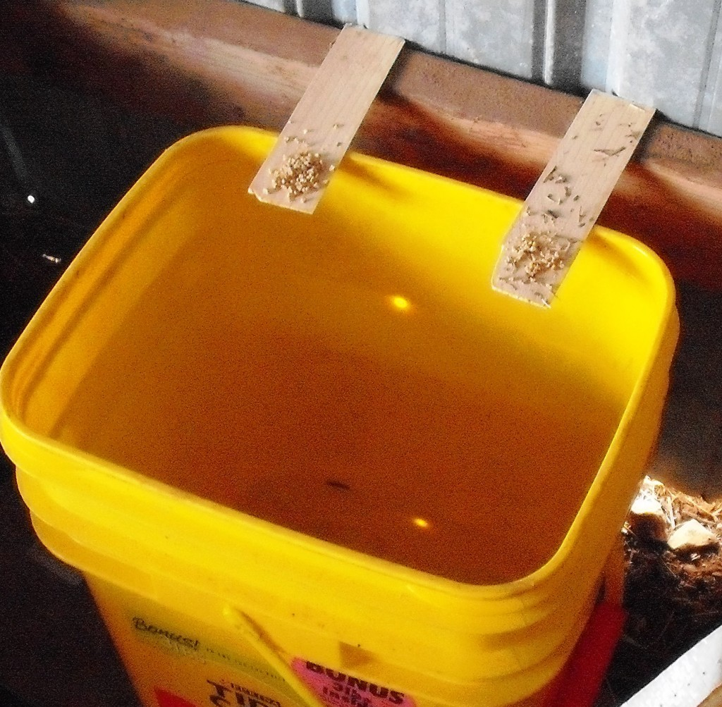plank bucket mouse trap