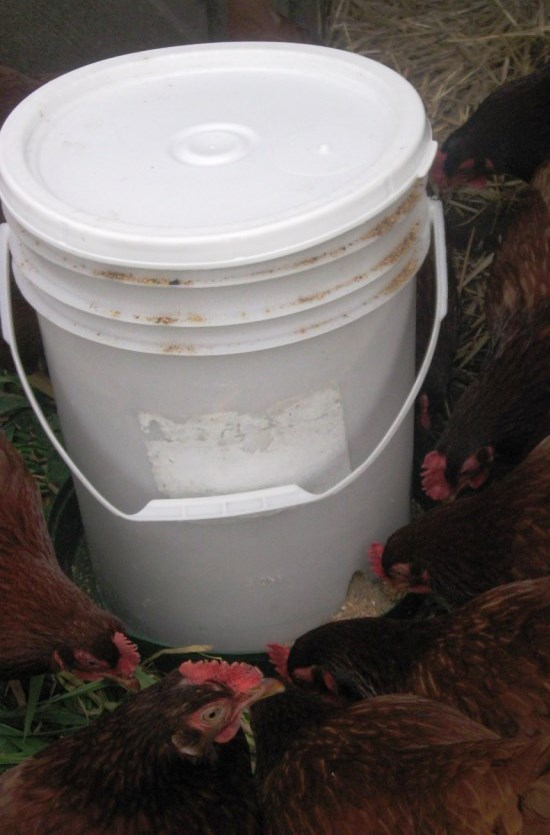5-gallon-bucket-chicken-feeder