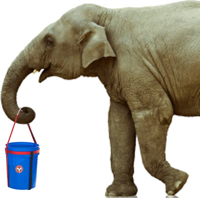 bucket-carrier-elephant