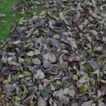 Autumn Leaves Scoop