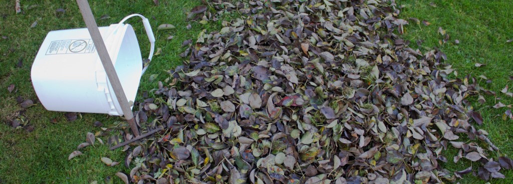 fall-leaves-bin