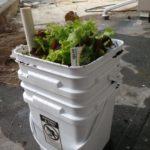 Sub Irrigated Planter