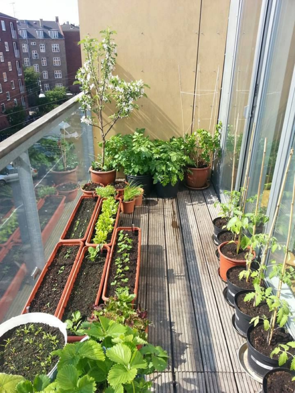 space constraint bucket garden balcony