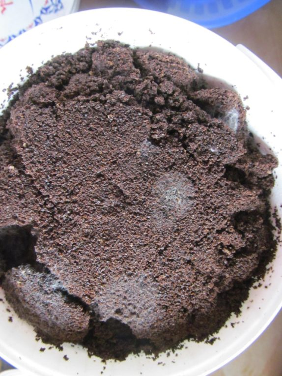 mold on coffee