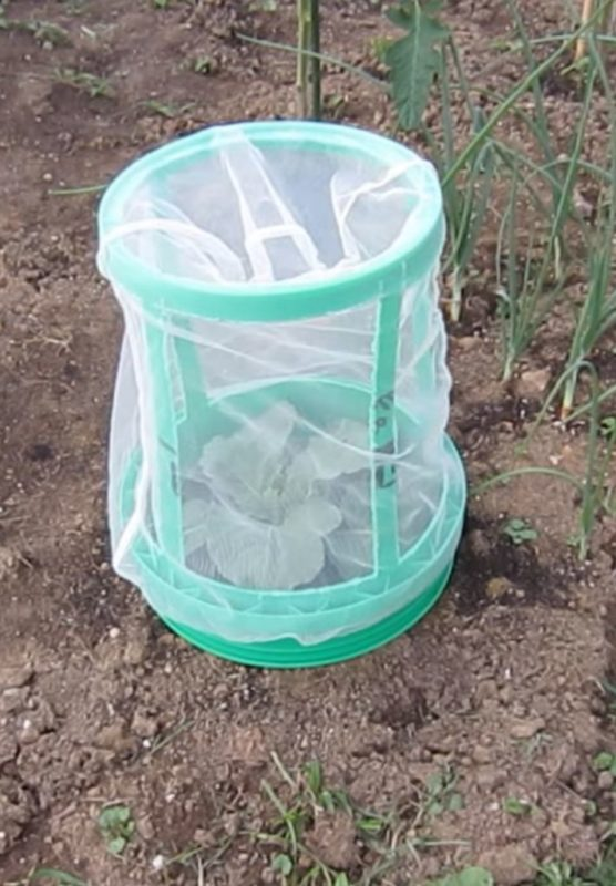five gallon bucket plant protector